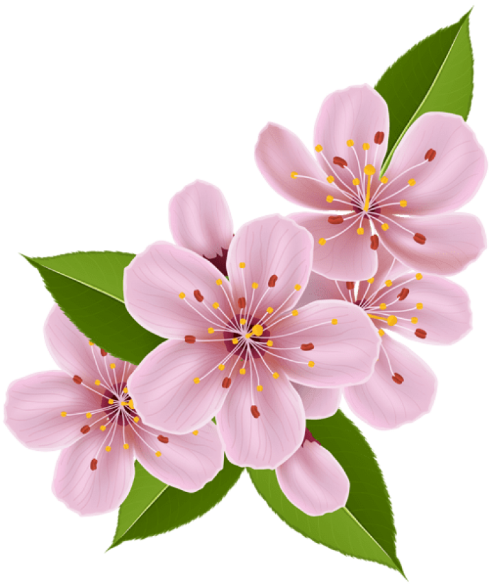 toppng.com-spring-cherry-blossom-flowers-503x600.png
